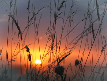 coucher de soleil sur herbe